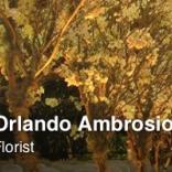 Orlando Ambrosio