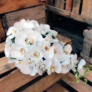 Buquê cascata de orquídeas