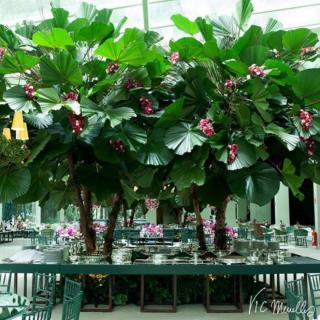 Mesa de Buffet com palmeira Leque