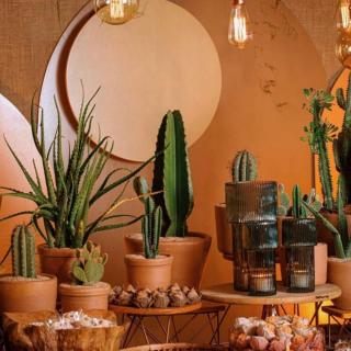 Decoração com Vasos e Cactus